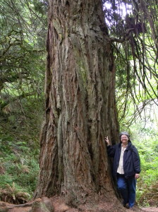 Mary with Coast Redwood (Sequoia sempervivens) along Steep Ravine Trail